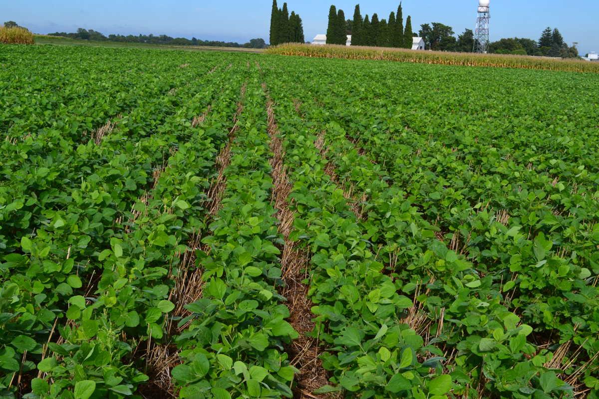 El nico cultivo que da ganancia es la soja el resto son for Que son cultivos asociados