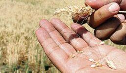 """Situación compleja, """"y al límite"""", tanto en agricultura como en ganadería"""